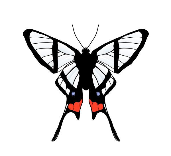 drawingbutterfly_7-5_chorinea_amazon
