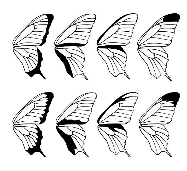 drawingbutterfly_8-3_design_margins