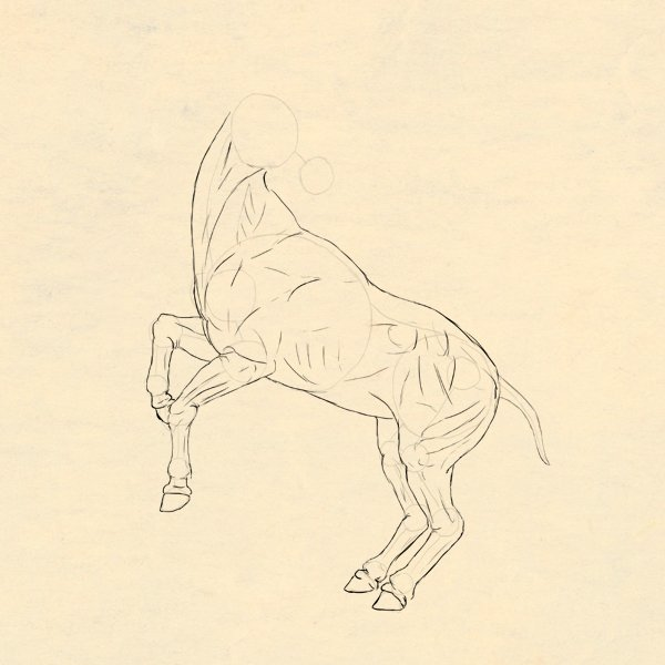 drawinghorse_4-12_hooves_done