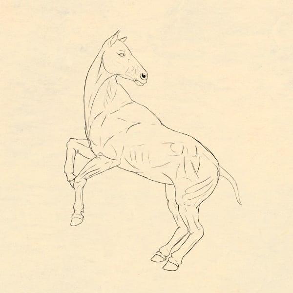 drawinghorse_8-3_head_done