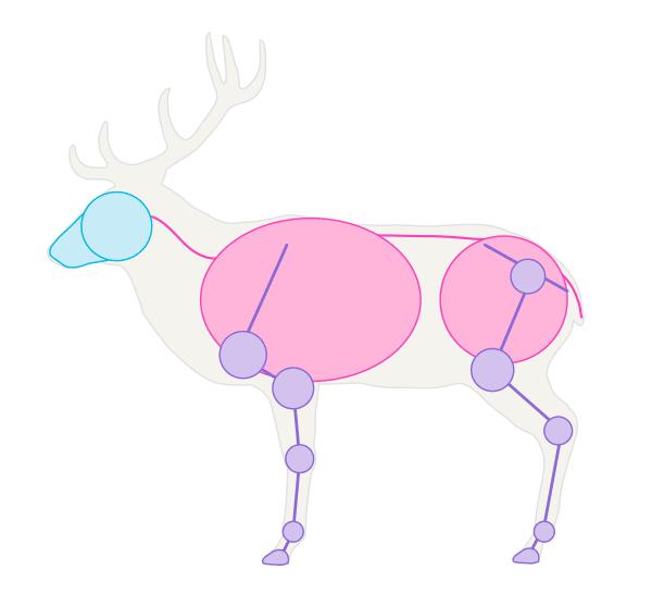drawingdeer-1-2-red-deer-skeleton