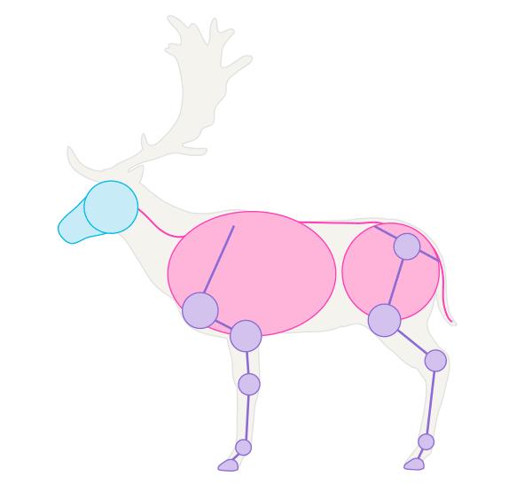 drawingdeer-1-5-fallow-deer-skeleton