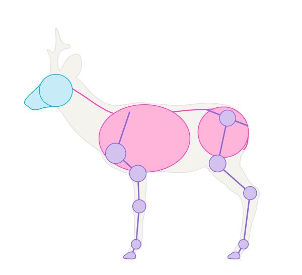 drawingdeer-1-6-roe-deer-skeleton