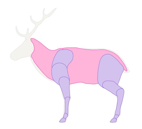 drawingdeer-2-1-deer-muscles-simplified