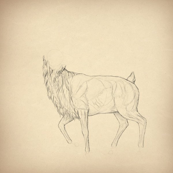 drawingdeer-2-10-muscles-done2