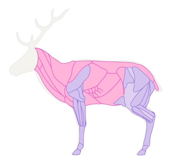 drawingdeer-2-2-deer-muscles