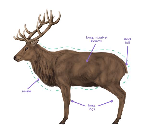 drawingdeer-2-3-red-deer-silhouette