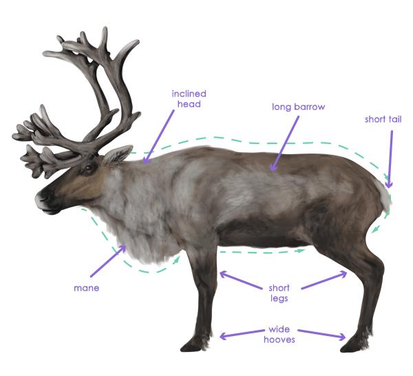drawingdeer-2-4-reindeer-silhouette