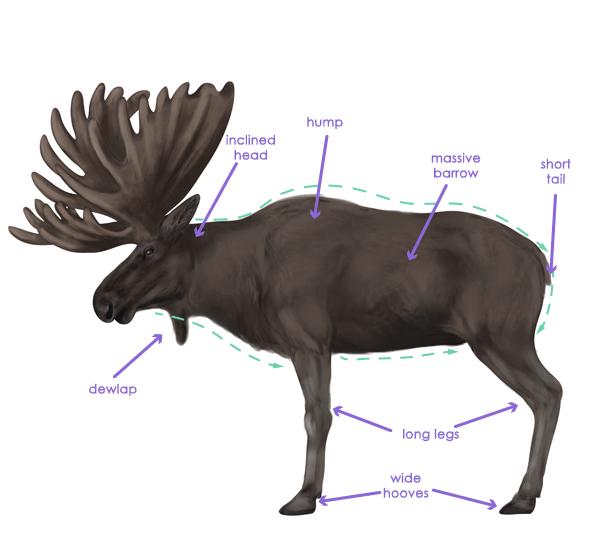 drawingdeer-2-5-moose-silhouette
