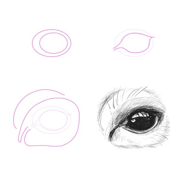 drawingdeer-5-1-deer-eye