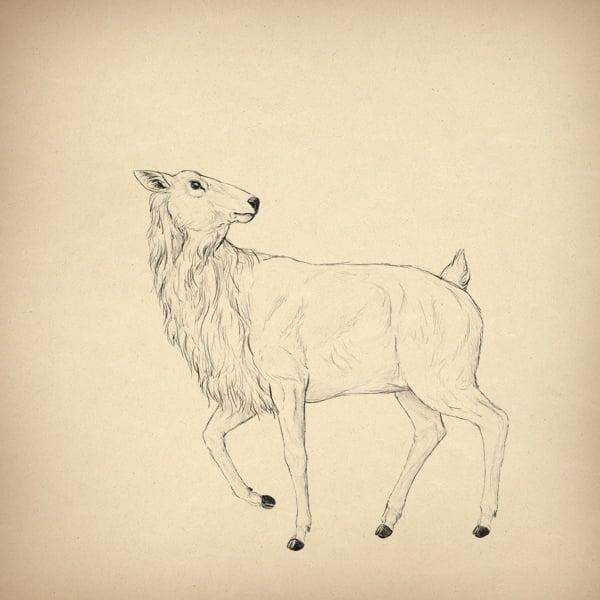 drawingdeer-5-10-head-done