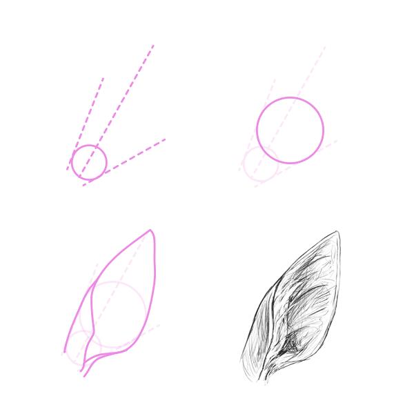 drawingdeer-5-3-deer-ear