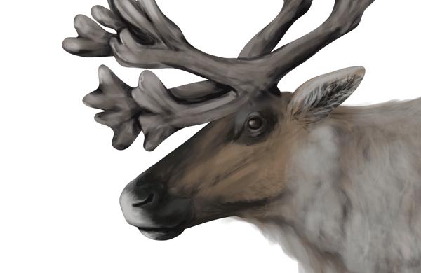 drawingdeer-5-5-reindeer-head-details