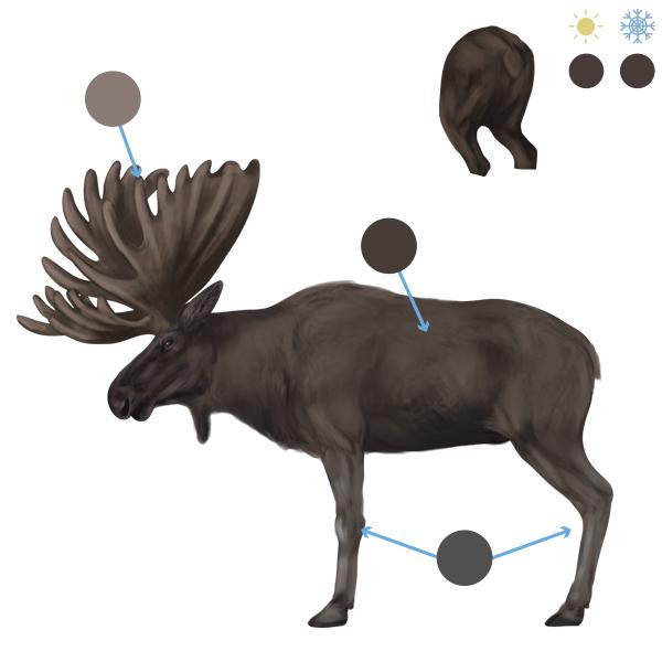 drawingdeer-6-3-moose-colors