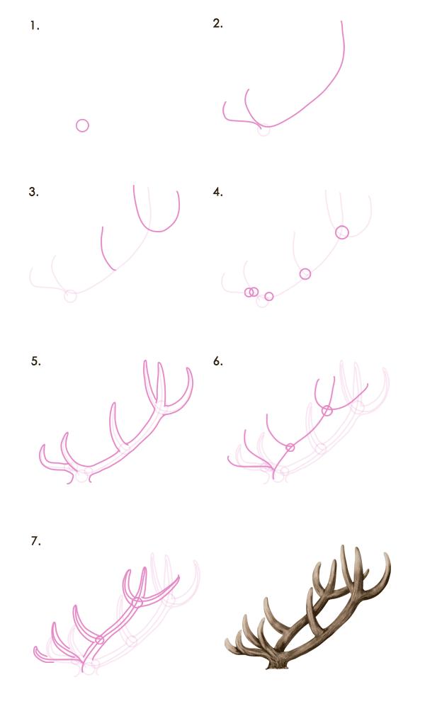 drawingdeer-7-1-red-deer-antlers