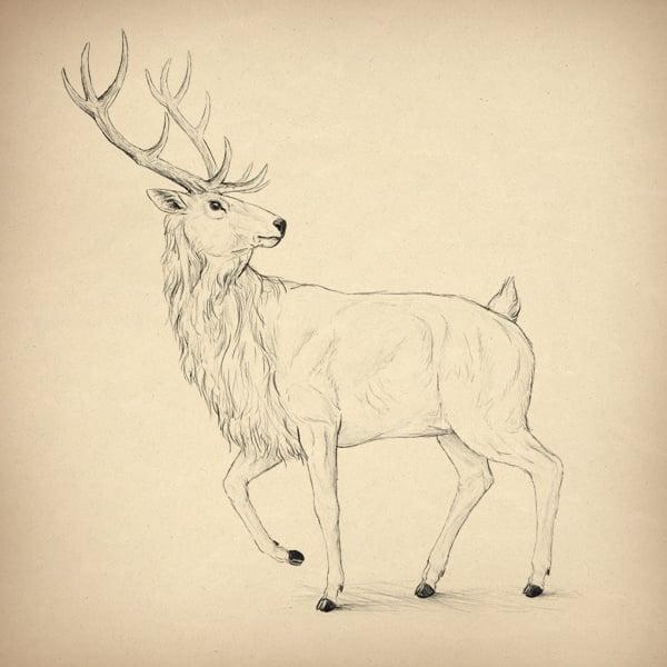 drawingdeer-7-8-antlers-done