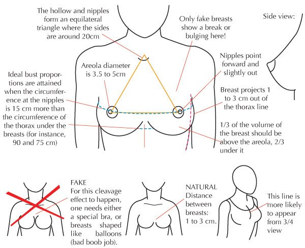 Breast proportions