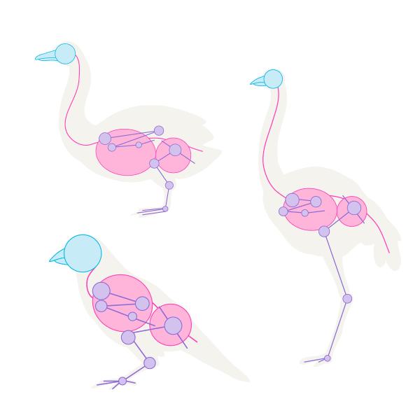 howtodrawbird-1-4-bird-species-skeleton-difference