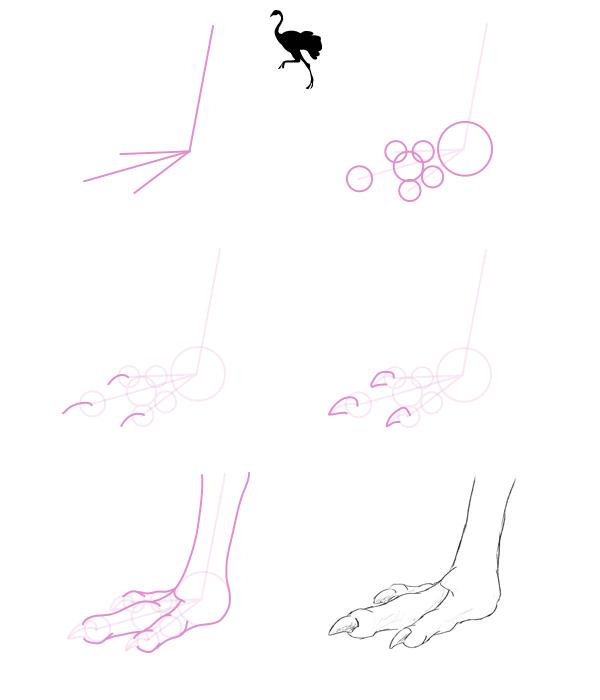 howtodrawbird-2-4-running-bird-feet
