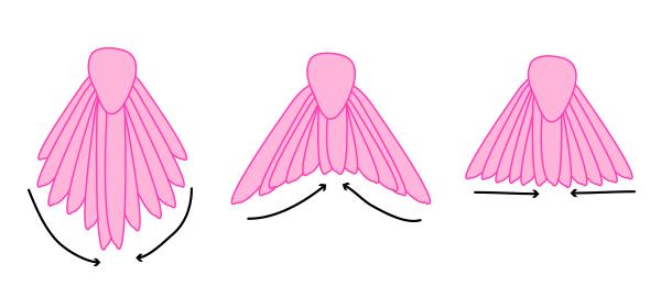 howtodrawbird-5-5-tail-types