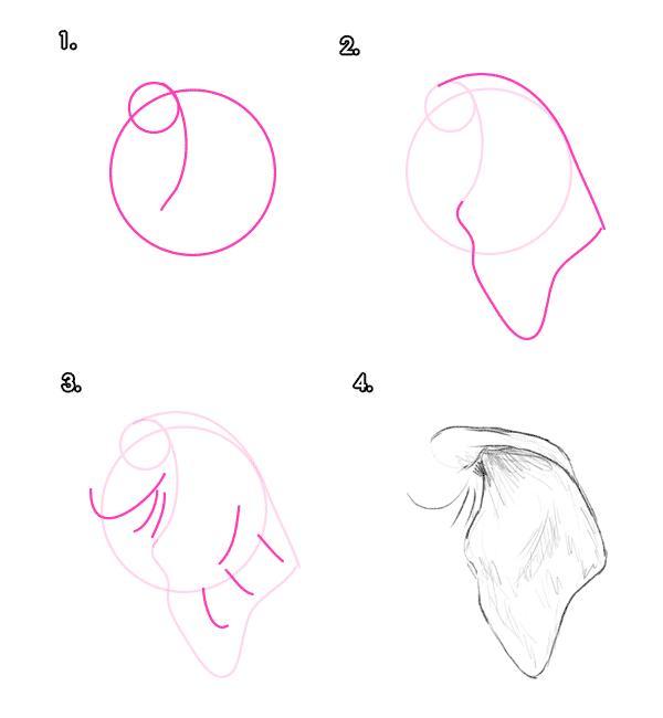 howtodrawelephants-3-4-asian-elephant-ear