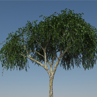 Preview for Designing and Animating a Birch Tree in Maya using Paint Effects