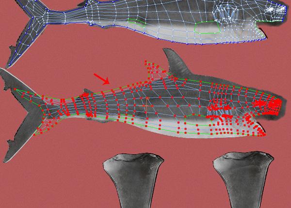 Shark_PT2_48
