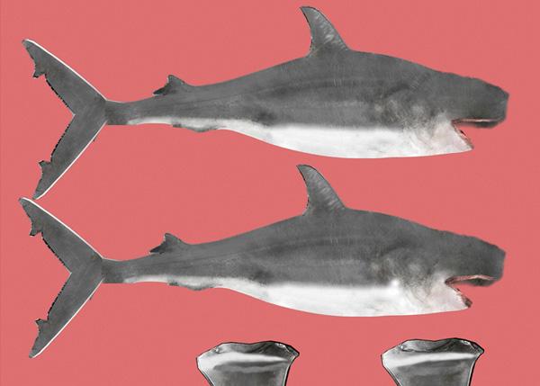 Shark_PT2_69a