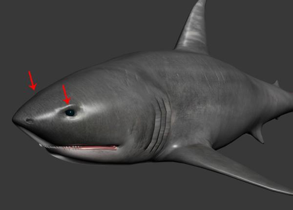 Shark_PT2_70a