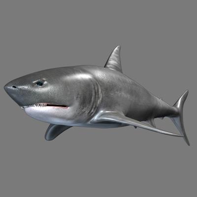3dsmax shark pt2 retina ru