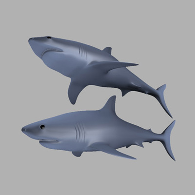 Preview for Create a Realistic Shark in Maya using Subdivision Surfaces: Part 1
