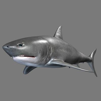 Max shark part1 retina2