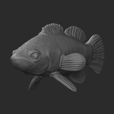 Zbrush multiple fish retina