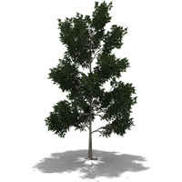 3d cg thumb tree dpit fx plugin growing animating modeling animating