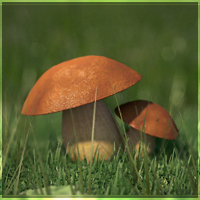 Preview for Revealing Nature's Magnificence: Creating A Mushroom Macro Render - Part 1