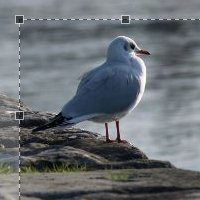 Preview for How to Create a jQuery Image Cropping Plugin from Scratch - Part II