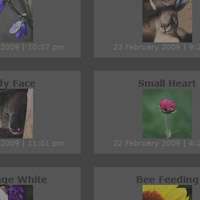 Link toCreate a slick flickr gallery with simplepie
