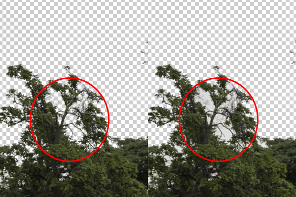 An area within the eraser brush size. I clicked outside of the trees, Contiguous vs Discontiguous.