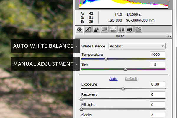 camera raw histogram white balance
