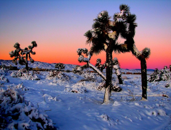 winter photography examples