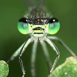Preview for 130+ Stunning Examples of Macro Photography