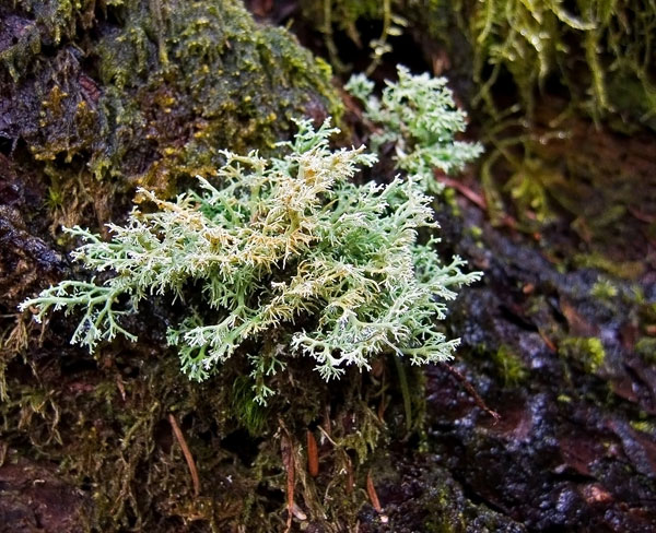 lichen moss photography