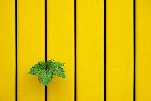 Less is more 50 examples of minimalist photography for Minimalist stuff