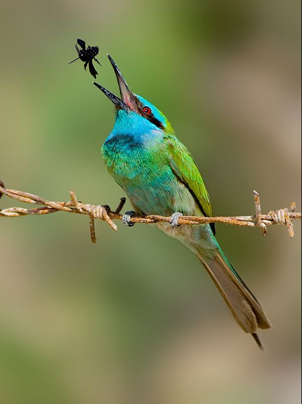 Beauty Of Nature 100 Brilliant Examples Bird Photography