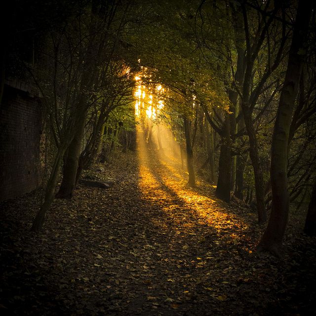 forest and woodland photography