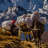 Preview for A Photographer's Guide to Visiting Nepal