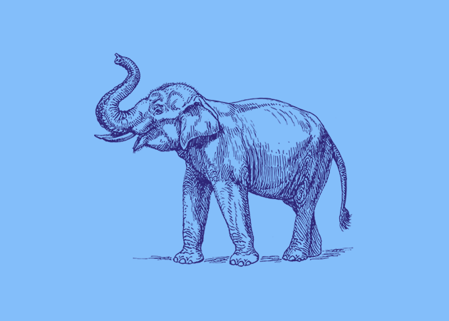 photoshop-and-web-design-elephant