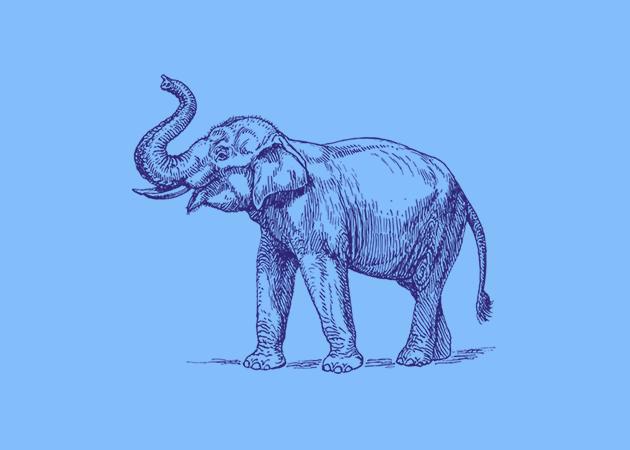 photoshop-and-web-design-elephant