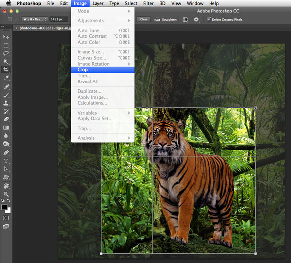 10 Things You Should Know About the Crop Tool