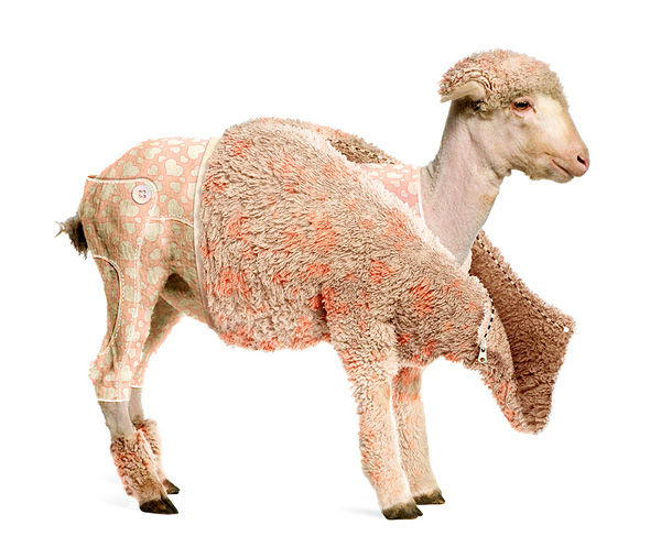 Photo effects week: create a lamb's coat in photoshop